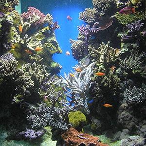 acuarios de agua salada