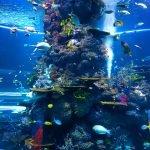 Arena para acuarios