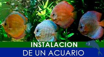 instalacion de un acuario